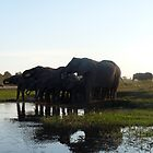 &#x27;Just Chilling......&#x27; - Chobe, Botswana by pennies4eles