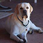 Brogan Dog by Crystal Davis Photography