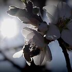 Bee-ginnings of spring by kurrawinya
