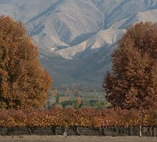 Wine region, Cafayete by J Forsyth