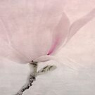 Magnolia Whisper by julie scully
