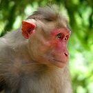 Monkey by Shiju Sugunan