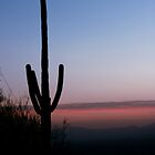 Cactus at Sunset 2 by EducatedSavage