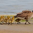 Family outing by Farras Abdelnour