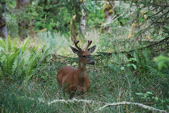 Young Buck by Payne24