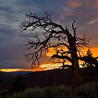 Broken Ponderosa Sunset by Kim Barton