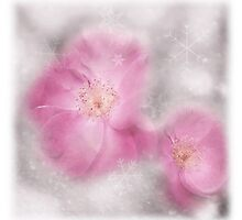 Wintry Roses by Denise Abé
