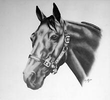 Horse by Penny Edwardes
