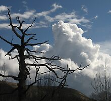 Dead tree and cumulus cloud by Jane Corey