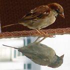 Bird Reflection by Honor Kyne