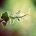 Green with Ivy by Ellaide