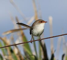 Bird on a Wire by Mandy Gwan