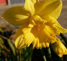 A Taste of Spring to Come by DEB CAMERON