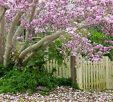 Magnolia Tree by waxyfrog