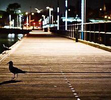 Legless Seagull on pier at night by FletchM