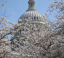 Statue of Freedom among Cherry Blossoms by Keith R Bujak