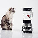 Fish Smoothie?? by Jennifer S.