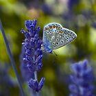 Blue Butterfly by Denise Abé