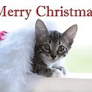 Christmas Kitten - Holiday card by trwphotography