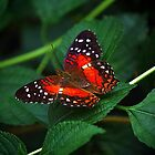 Scarlett Wings by Jim  Egner