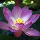 Waterlily and Light by Linda  Makiej Photography