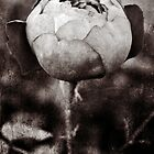 Sepia Textured Rose by Astrid Ewing Photography