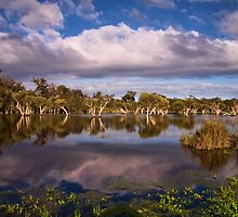 """""""Swampland Reflections"""" by Heather Thorning"""