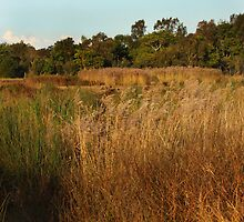 Dry Wetlands by byronbackyard