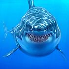 Great White by Chris Wahl