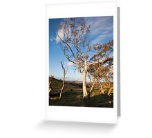 Cattle Country Greeting Card