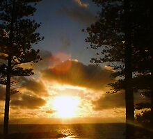 Cottesloe From The Pines by Robert Phillips