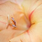 Wonderful Gladiolus II by vbk70