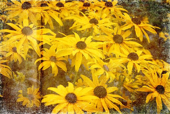 Rudbeckia by Astrid Ewing Photography