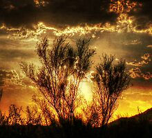 Sunset Bush by George Lenz