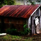The Shed Out Back by DionNelson