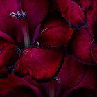 Blood Red Gladioli by Ann Garrett