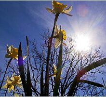 Spring Greeting by J. David Peterson