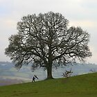 Tree swing by TimLarge