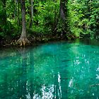 Silver Springs Florida by Julie Everhart