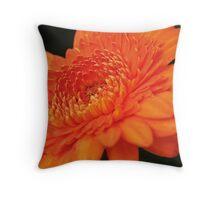 Vibrant orange gerbera daisy Throw Pillow