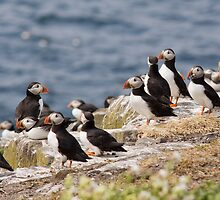 Pick A Puffin.... by Lynne Morris