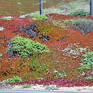 Monterey Succulent 2 by Polly Greathouse