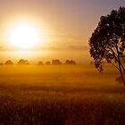 Golden Sunrise - Verrierdale - Queensland by AMP  Al Melville Photography