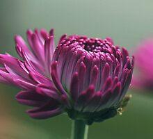 Budding purple by IngeHG