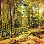 Pines by Mihaela Limberea