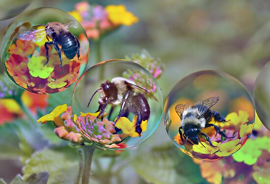 Bumble Bees by venny