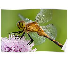Sparkling Dragonfly Poster