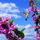 Beautiful Day for a Hummingbird by barnsis