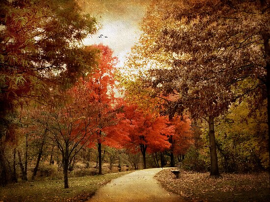 Autumn Maples by Jessica Jenney