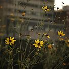 High Line Park Flowers by Vivienne Gucwa